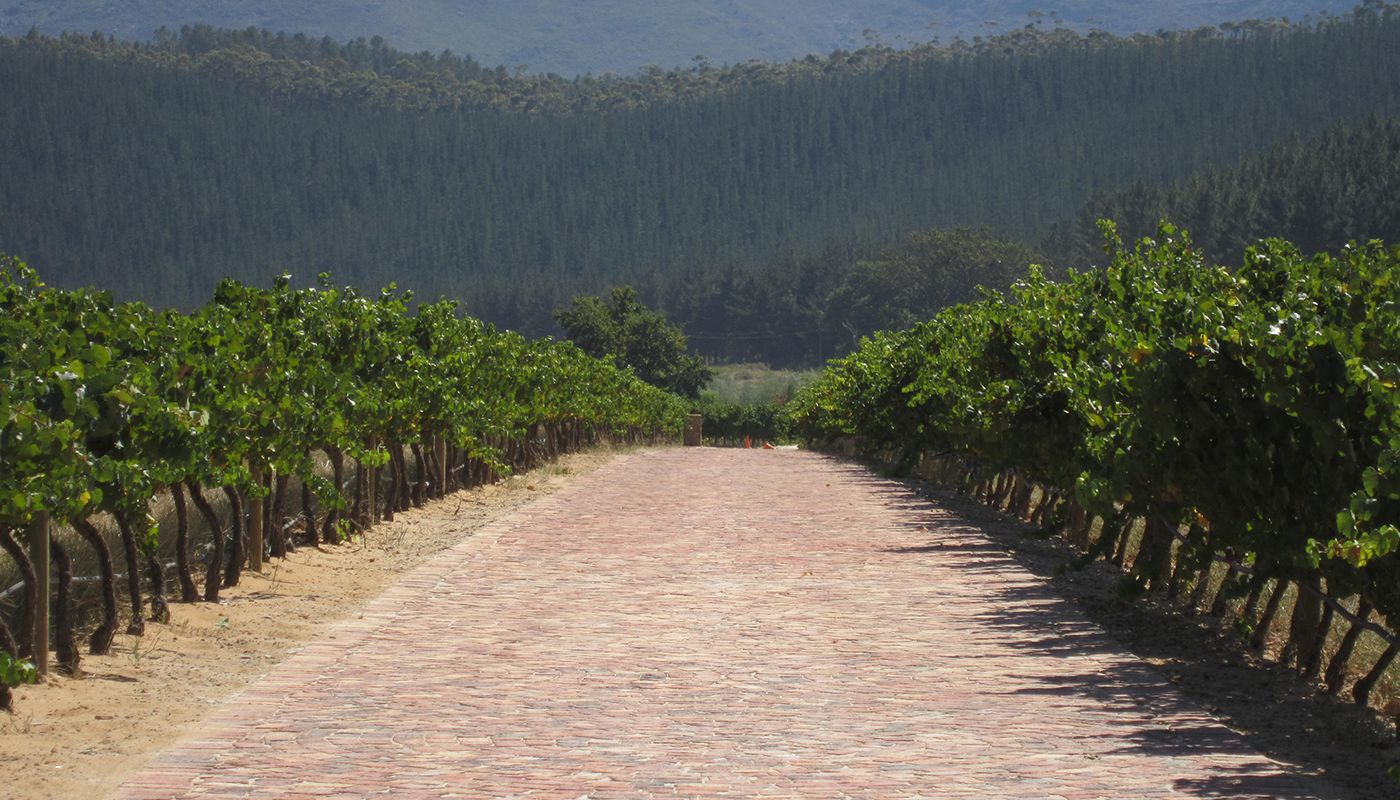 vineyard-paving